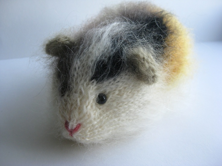 new multicolour guinea pig Ulyana. Celia Pinterest