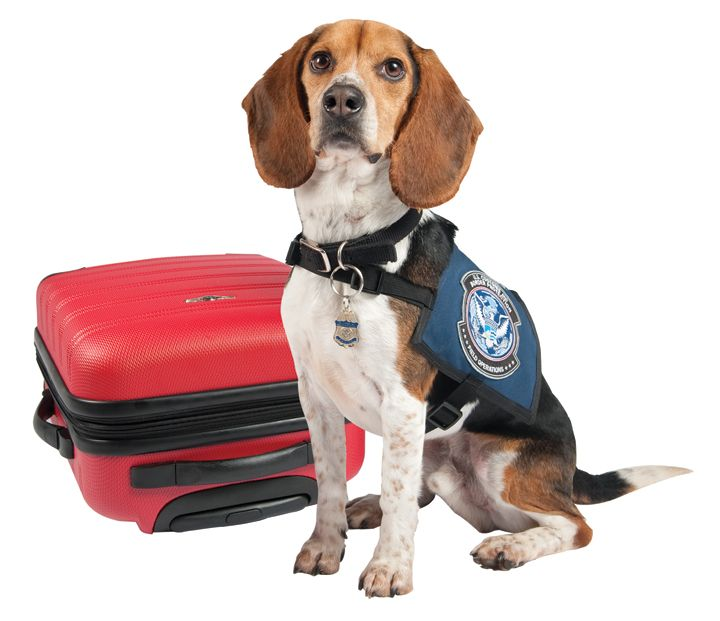 resources tips traveling with pets
