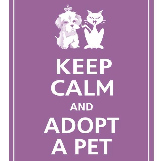 adopt a pet good pet quotes pinterest