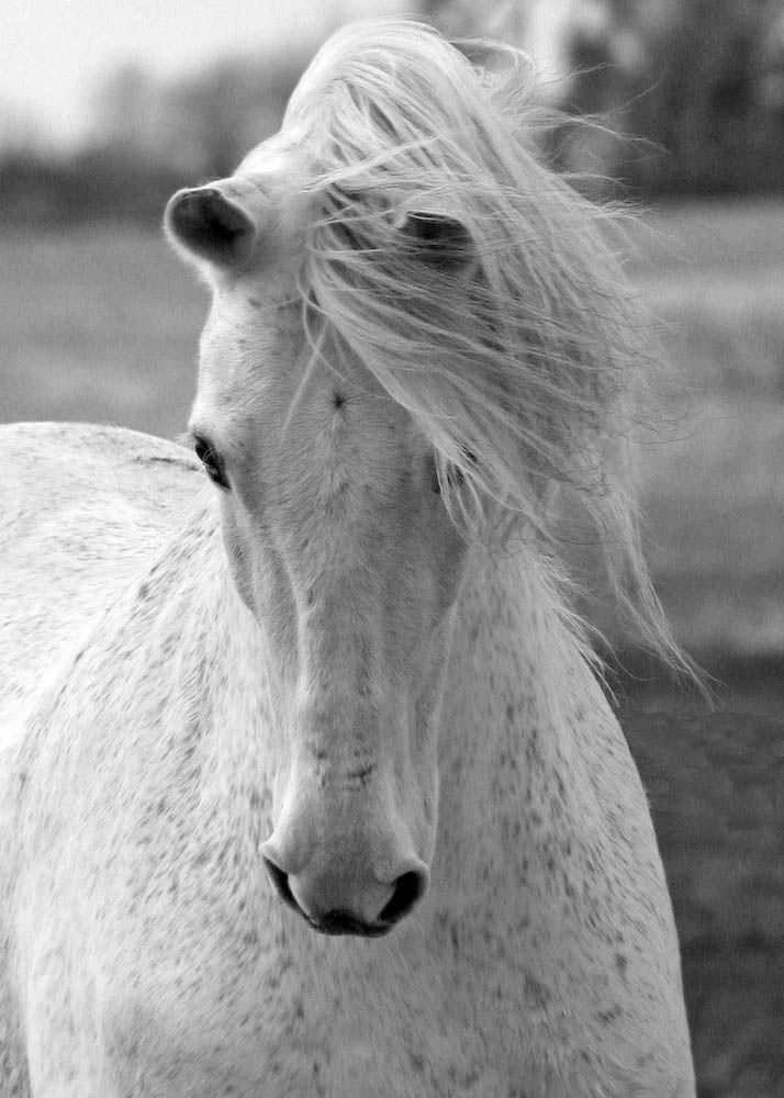 samantha lamb | Equine Photography | Pinterest