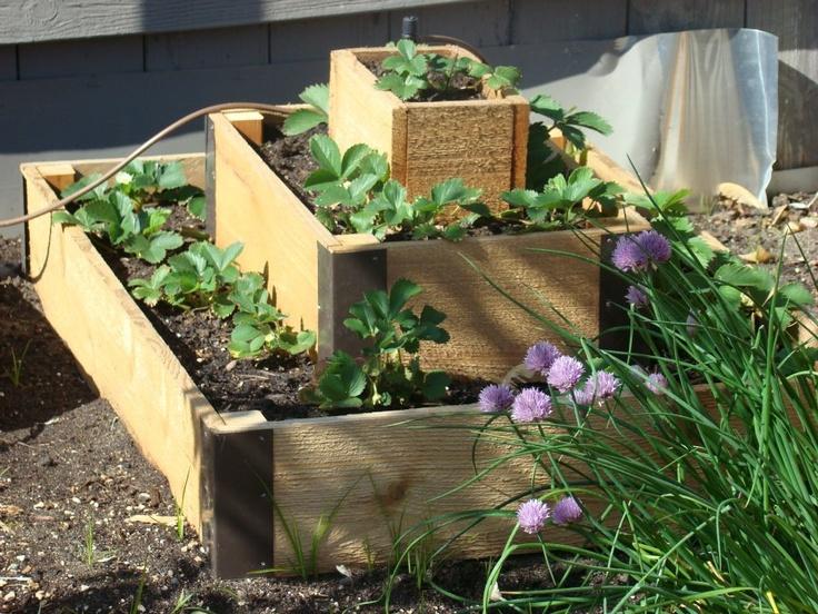 Raised Garden Boxes Garden Pinterest