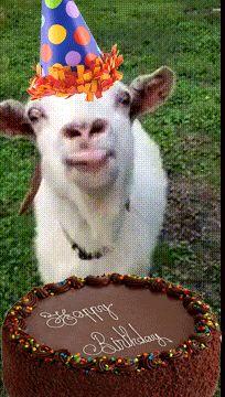 Happy birthday goat - photo#7