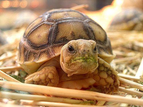 Cute box turtle