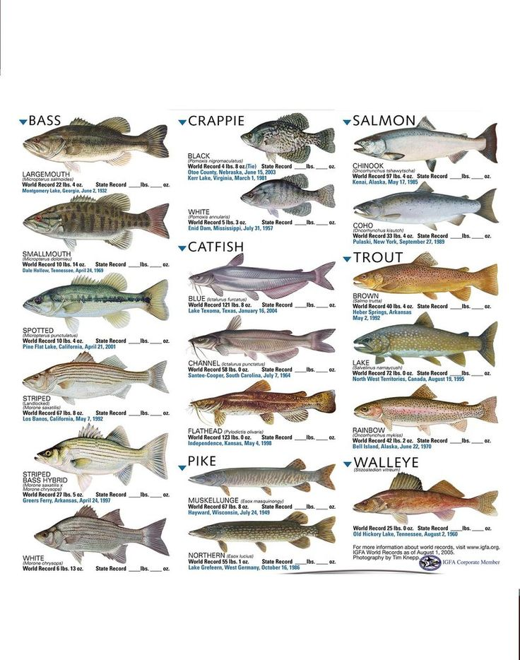 freshwater fish good to know pinterest