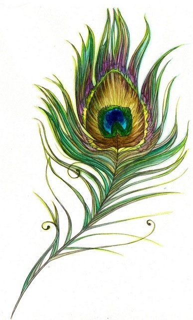 peacock feather sketch art pinterest