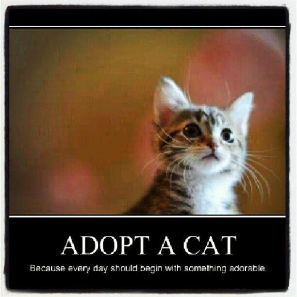 adopt a cat cats pinterest
