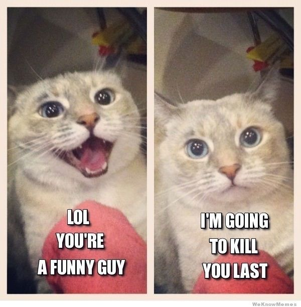 funny guy cats amp kittens pinterest
