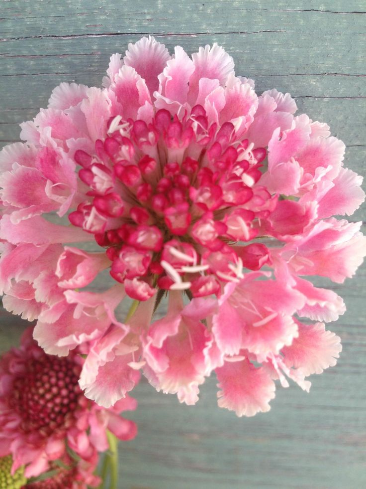 pink flowers for valentines day