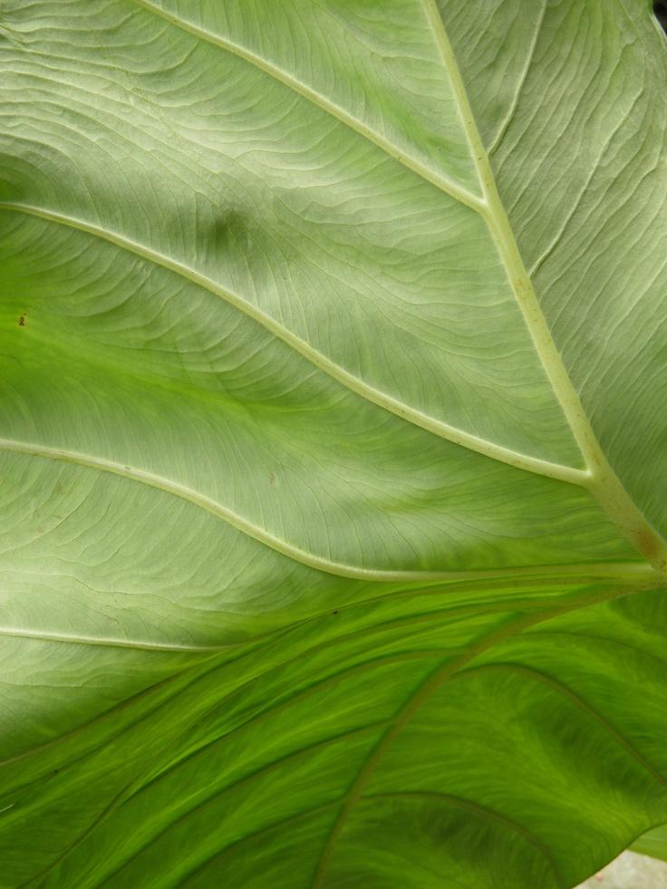 lovely leaf pattern