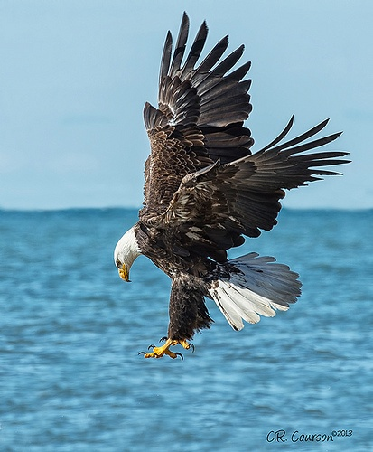 Lake Erie: Eagles On Lake Erie