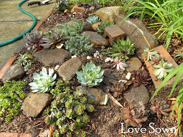 Incroyable Succulent Rock Garden