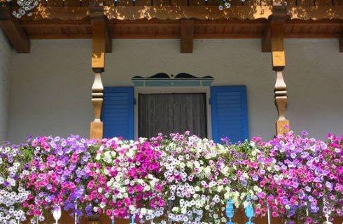Piante da balcone resistenti al sole balcony blossom for Piante da balcone resistenti al sole e al freddo