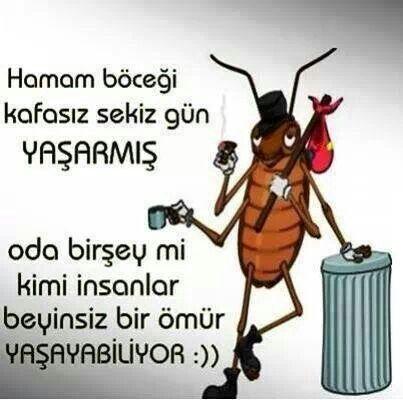 Https m facebook com sozcukalem