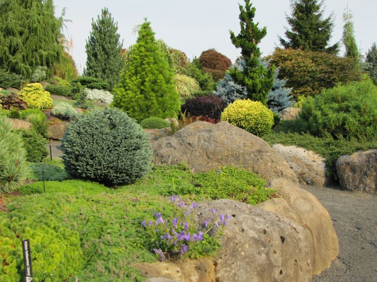 Evergreen landscaping landscape ideas pinterest - Evergreen landscaping ideas ...