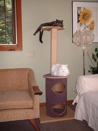 Diy cat tree for my pets pinterest for Diy cat tree