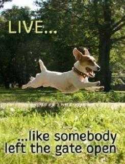 My new motto!!