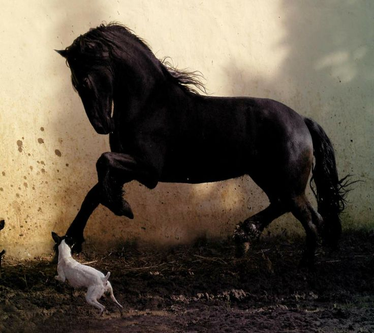 horse wallpaper awesome pair - photo #42