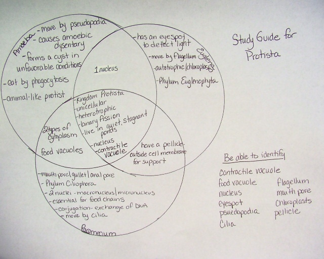 Protists Viruses And Bacteria Venn Diagram Automotive Wiring Diagram