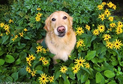I am a pretty flower too!