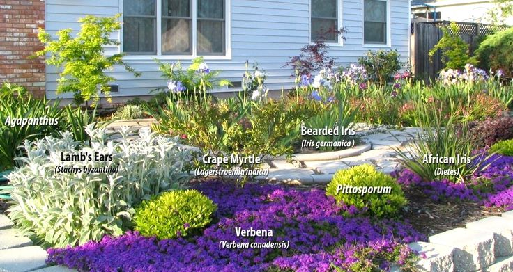 Pin by j c on front yard pinterest for Low maintenance low water landscaping
