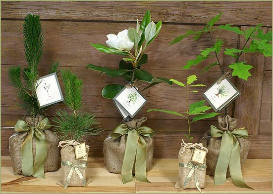 Wedding Gift Ideas Plants : Arbor Day Gift Earth Day/Arbor Day Pinterest