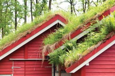 green roof for the coop