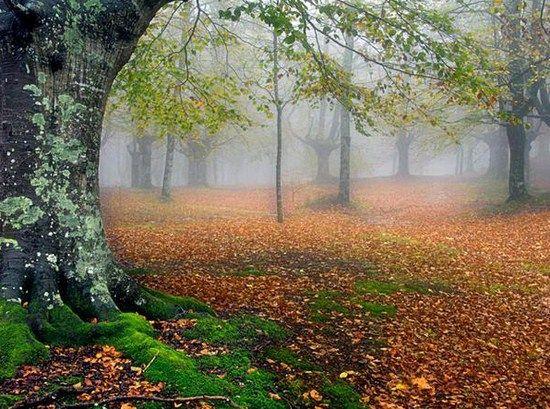 Fairy landscape google search fairies pinterest for Find a landscaper