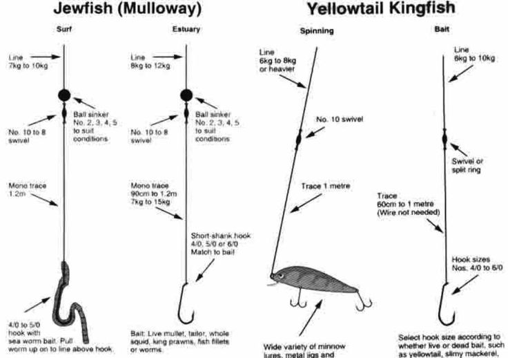 fishing knots and rigs pdf