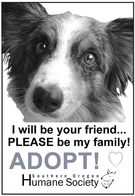 Sohumane Adopt Dog