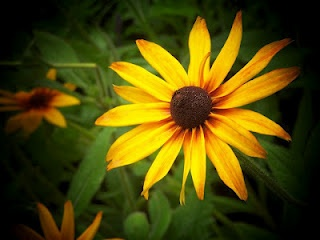 Is this the result of a good camera or just an incredible flower to photograph???
