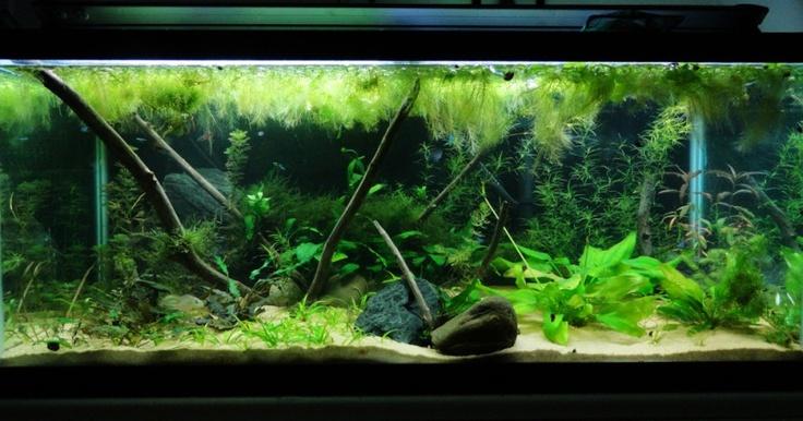75 Gallon Aquarium Ideas 75 Gallon Tanganyikan Cichlid
