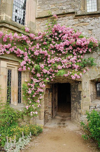 climbing roses.....