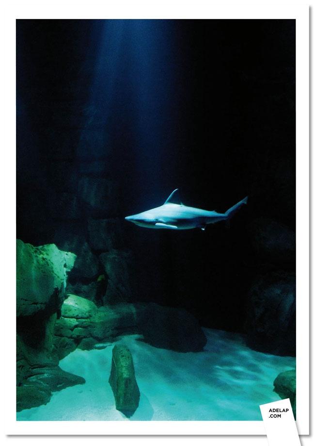 aquarium de Paris Underwater Animals & Fish & Plants Pinterest