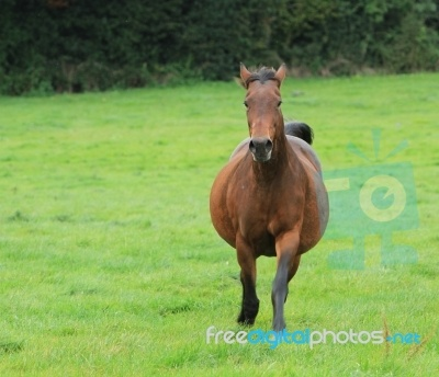 Fat Horse Galloping | Horses & Colts | Pinterest: pinterest.com/pin/377458012489216095