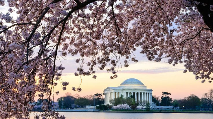 Today's Daily Escape is from Washington, DC! (Photo by Getty)
