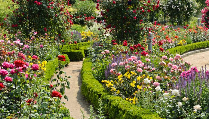 Landscaping With Boxwoods And Roses : Classical rose boxwood tuinen gardens