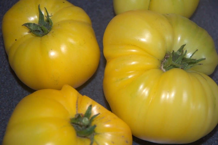 Azoychka yellow heirloom tomato | Things we are growing ...