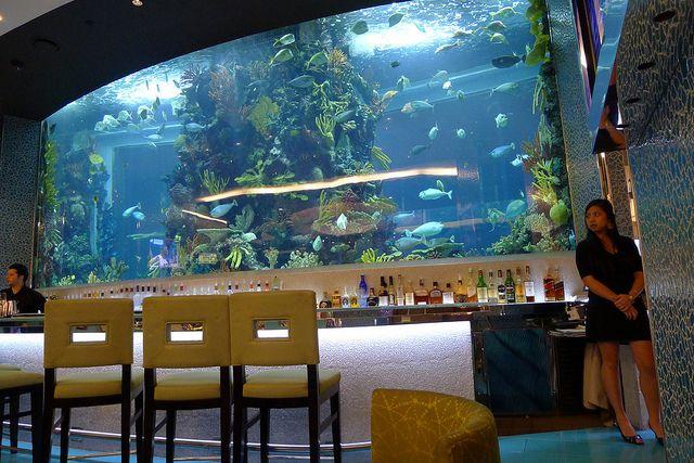 Massive bar aquarium fish tank aquariums fish tanks for Fish tank bar