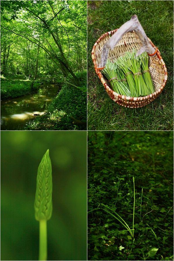 Asperges des bois # wild asparagus  food  Pinterest ~ Asperge Des Bois