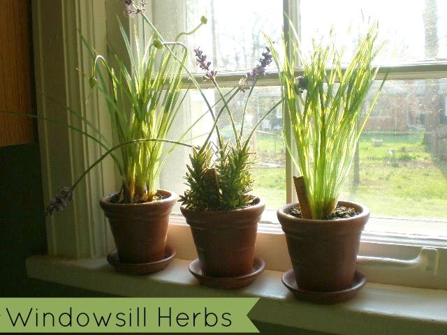 How To Plant Your Own Windowsill Herb Garden And Save Money