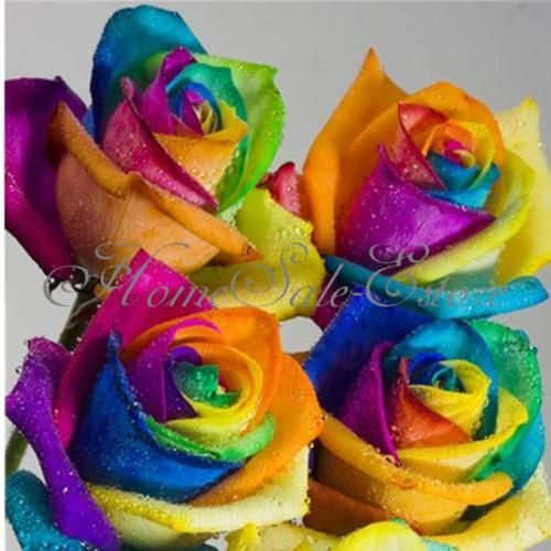 100pcs rare rainbow rose flower seeds your lover multi for Pictures of multi colored roses