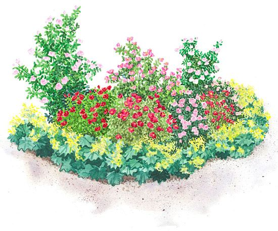 Small garden plans and ideas for Rose garden design