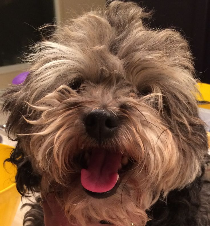 Socal Dogs For Adoption