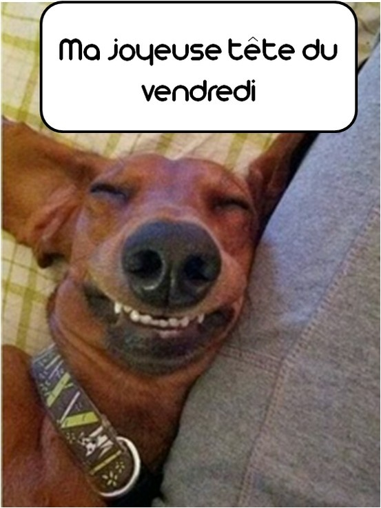 Friday Happy Face Vendredi Funny Dog Pet Chien Animaux