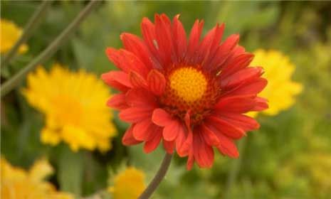 Best easy care perennial flowers add a profusion of colorful flowers
