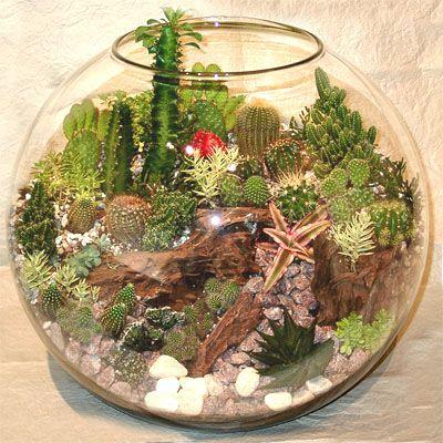 Как из аквариума сделать флорариум