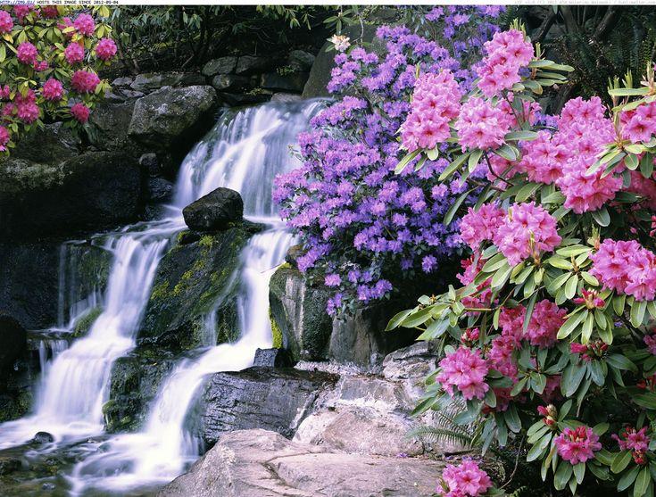 Portland OR Crystal Springs Rhododendron Garden Pinterest