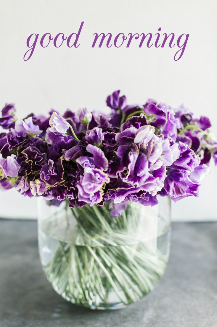 Pictures of good morning purple roses kidskunstfo good morning purple pinterest izmirmasajfo