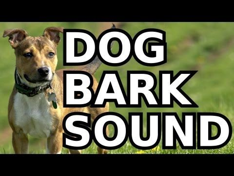 Dog Barking Sound Effect