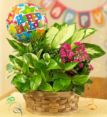 1800flowers birthday adogable